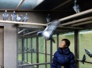 Racing Pigeon Fetches £300,000 to Become the Most Expensive Bird