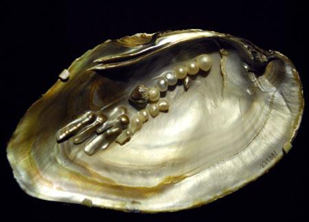 mussel-shell6.jpg