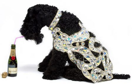 Clad your Dog with $5,084 Vivienne Westwood Diamond Coat