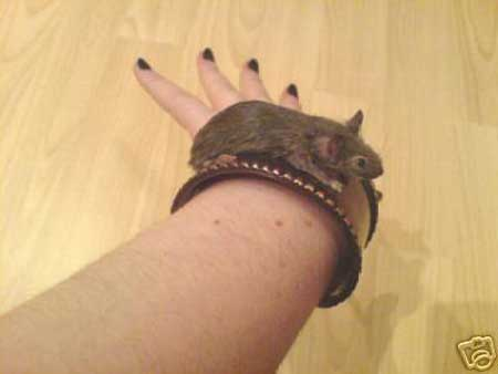mouse bracelet Taxidermy Mouse Bracelet