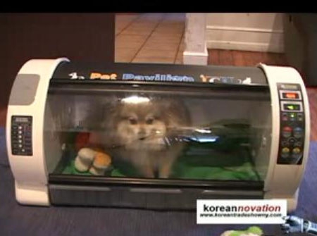 Pet Pavilion: Luxury Pet House Or Doggie Microwave?