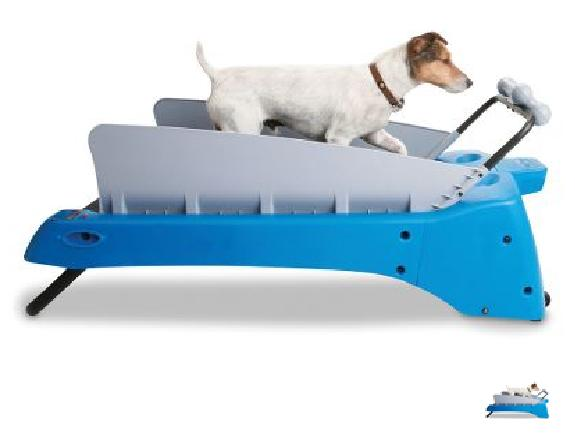 Canine Treadmill