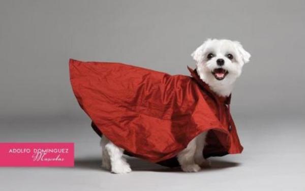 dog-jacket