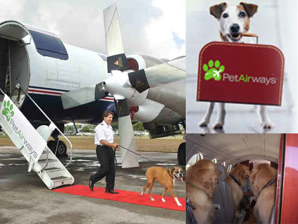 pet_airways