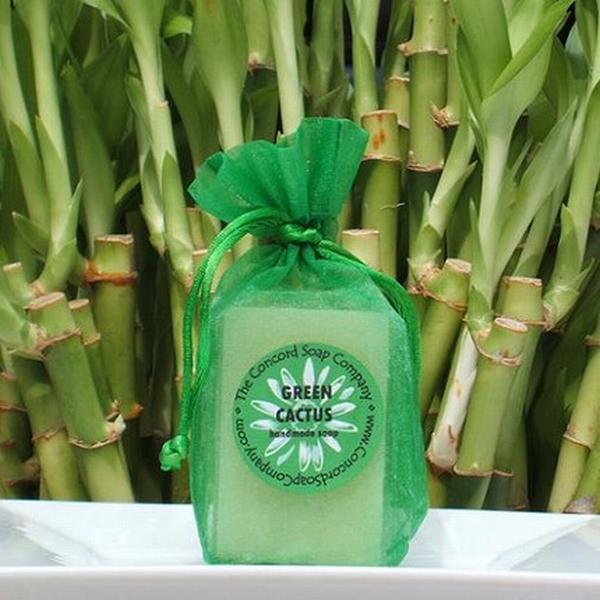 cactus-soap