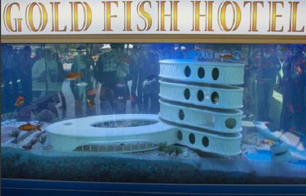 goldfish-hotel-1