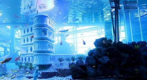 goldfish-hotel-2