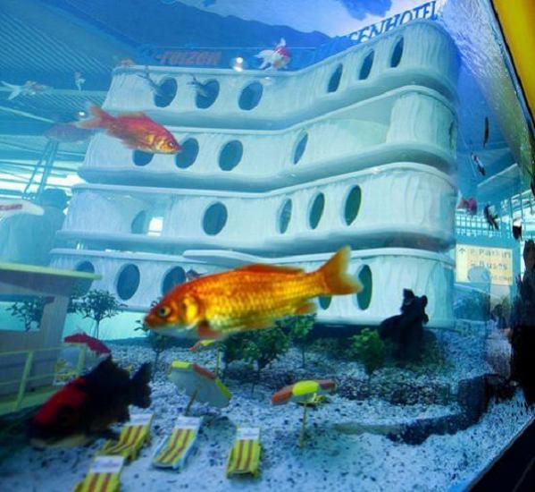 goldfish-hotel-3