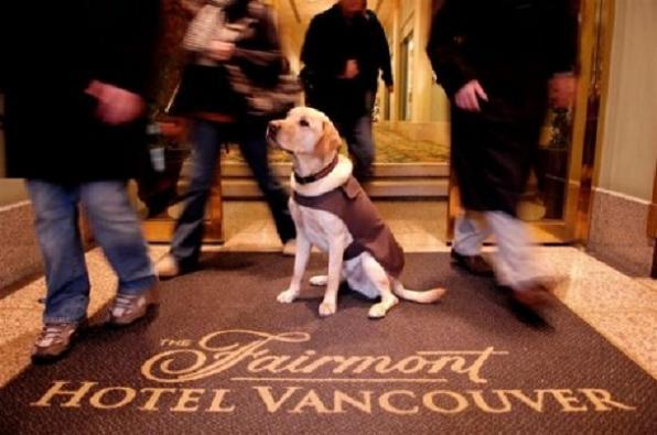 canine-ambassador
