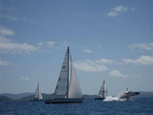 Whale-Leap-Audi-Hamilton-Island-Race-Week