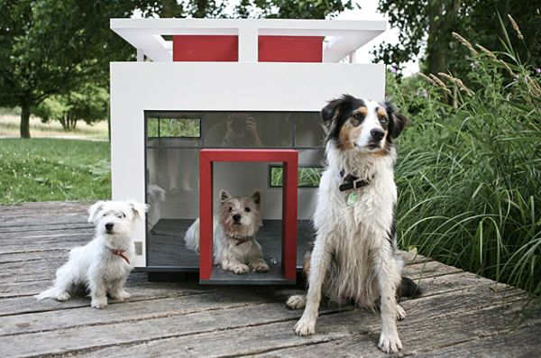 dog-mansions