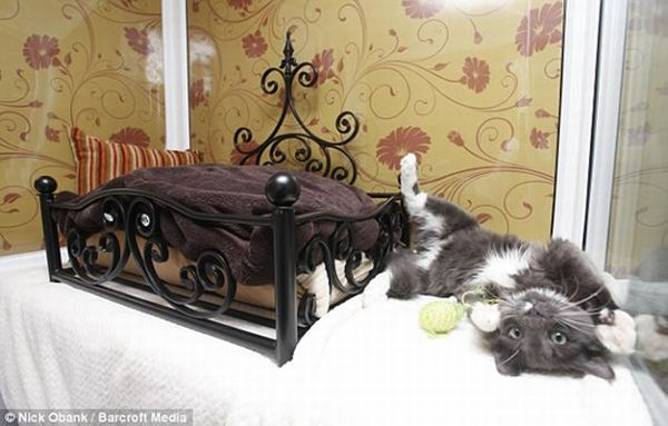 Longcroft-Luxury-Cat-Hotel