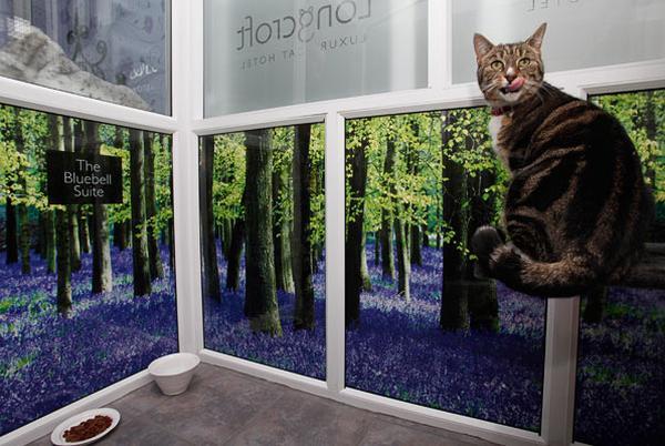cat hotel 1