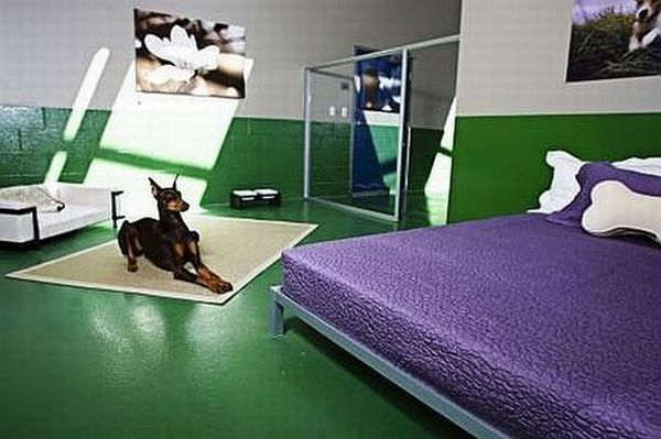 pooch hotel for dogs