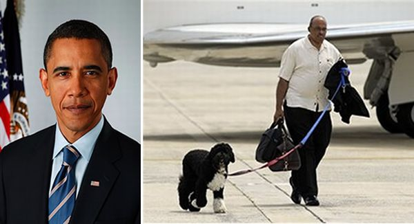 obama_dog_bo_on_private_jet