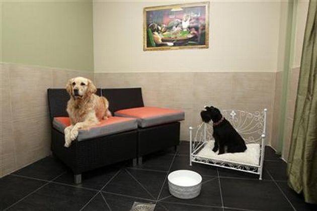 actuel dog hotel