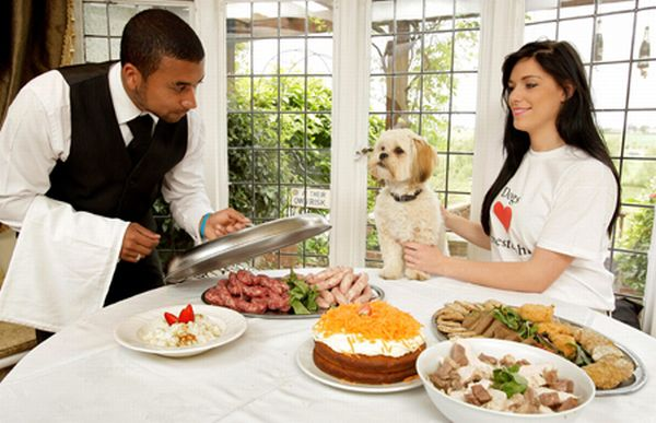 Luxury hotel for dogs provides them with their own butler for Best hotels for pets