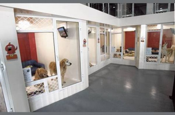 Urban tails is the first of its kind luxury pet resort in for Best hotels for pets