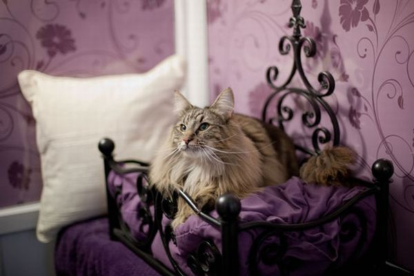 Longcroft_Luxury_Cat_Hotel