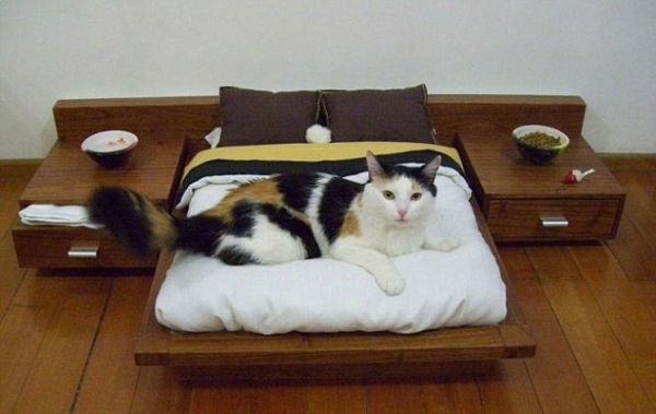 Luxury Platform Bed for Cats Would Cost you $1,600
