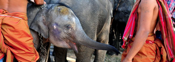ck_elephant_family