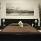 dog-in-d-pet-hotel