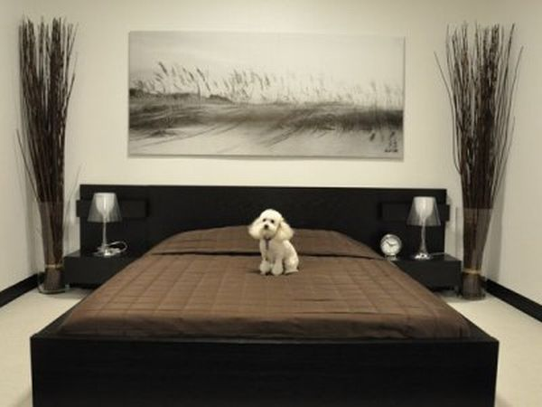 D pet hotel comes to new york with new standards of luxury for Dog hotel los angeles