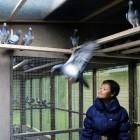 Pigeon Paradise in Knesselare, Belgium