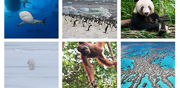 VeryFirstTo's Ultimate Tour to Wildlife Destinations