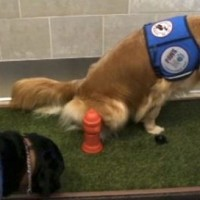 Happy Dogs Using the Indoor Facility